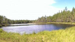 Metsälampi Falunin lähellä